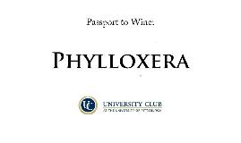 Phylloxera Wine Tasting
