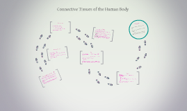 Connective Tissues of human body