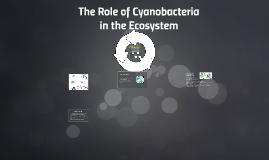 The role of cyanobacteria