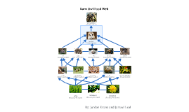 Barn Owl Food Web by jamael leal on Prezi
