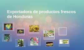 Exportadora de productos frescos de Honduras