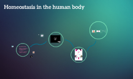 Homeostasis in the human body