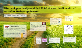 Copy of Copy of Effects of genetically modified T2A-1 rice on the GI health