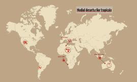 Copy of Mediul deserturilor tropicale