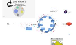 Copy of Glucólisis y Ciclo de Krebs