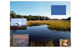 Whooping Crane Ecosystem