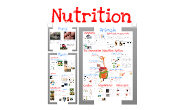 Copy of AP Bio- Physiology 2: Nutrition