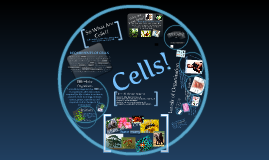 Cells - Stage 4