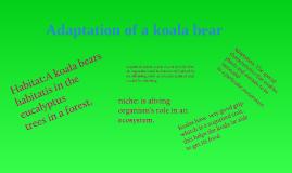 Adaptation of a koala bear