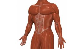 Développement des qualités musculaires