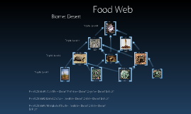 Copy of Food Web