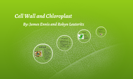 Cell Wall and Chloroplast