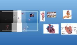 Das vaskuläre System