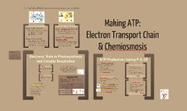 BI 2: Electron Transport Chain & Chemiosmosis