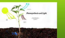 Photosynthesis and Light