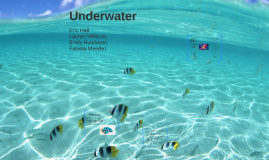 Copy of Underwater