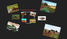 AGRICULTURA MODERNA Y TRADICIONAL