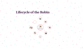 Lifecycle of the Robin