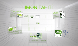Copy of LIMON TAHITI