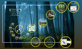 conceptos de manejo forestal