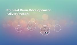 Prenatal Brain Developement