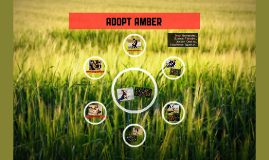 ADOPT Amber