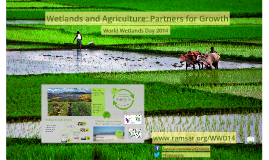 Copy of Wetlands and Agriculture: Partners for Growth