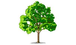 Spanish Family Tree