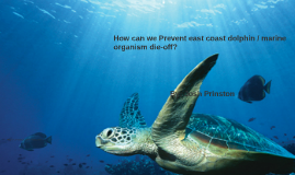 How can we Prevent east coast dolphin / marine organism die-
