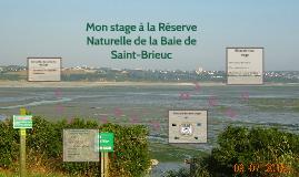 Mon stage à la Réserve Naturelle de la Baie de Saint-Brieuc