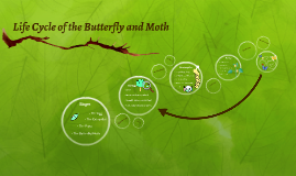 Life Cycle of the Butterfly and Moth