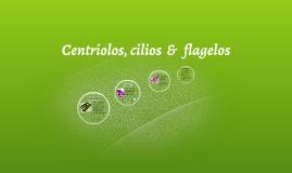Centriolos, cilios  &   flagelos