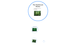 There are two different types of rain forest, a tropical...