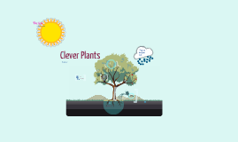 Clever Plants