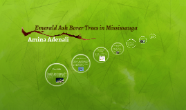 Emeral Ash Borer Trees in Mississauga