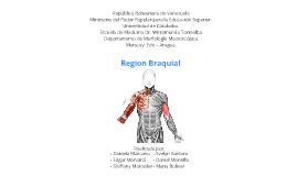 Region Braquial