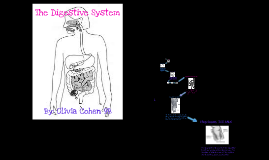 Copy of The Digestive System