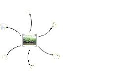 Importancia de humedales y manglares