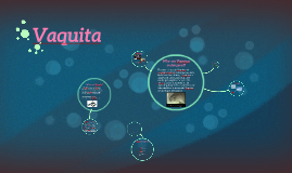 Copy of Vaquita