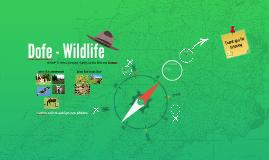 Dofe - Wildlife