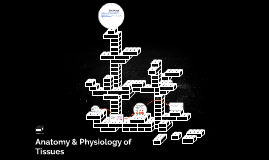 Anatomy & Physiology of Tissues