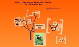 Copy of PRODUCCIÓN CAPRINA ALIMENTADOS CON FORRAJE VERDE HIDROPÓNICO (FVH) DE MAÍZ