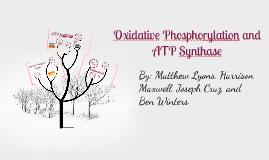 Oxidative Phosphorylation and ATP Synthase