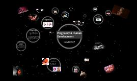 Pregnancy & Human Development