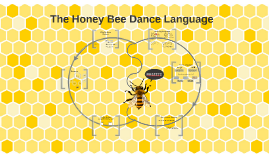 Copy of The Honey Bee Dance Language