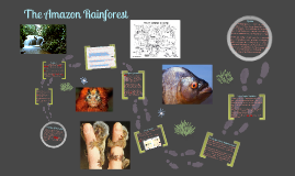 Copy of Amazon Rainforest