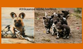 http://honden.blogo.nl/files/2010/06/wilde-hond.jpg