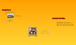 Copy of Alpaca