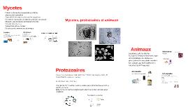 Mycetes, protozoaires et animaux