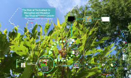 The Role of Technology in Managing and Mapping the Trees of Fairfax County